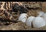 Сцена из фильма Крошечные существа / Tiny Creatures (2020) Крошечные существа сцена 6