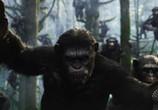Фильм Планета обезьян: Революция / Dawn of the Planet of the Apes (2014) - cцена 2