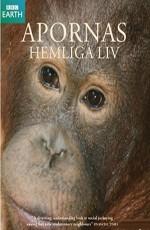BBC.Тайная жизнь приматов