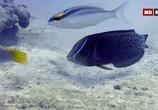 ТВ Выживание на коралловом рифе / Coral Reef Survivors (2019) - cцена 2