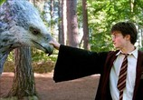 Фильм Гарри Поттер и узник Азкабана / Harry Potter and the Prisoner of Azkaban (2004) - cцена 5