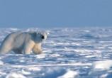 Сцена из фильма Топ Гир - Полярный Спецвыпуск / Top Gear - Polar Special (2007) Топ Гир - Полярный Спецвыпуск сцена 3