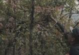 Сцена из фильма Идеальный дворец Фердинанда Шеваля / L'incroyable histoire du facteur Cheval (2018) Идеальный дворец Фердинанда Шеваля сцена 3
