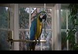 Фильм Джеймс Бонд - 007 : Искры из глаз / The Living Daylights (1987) - cцена 6