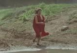Фильм Армия Бранкалеоне / L'armata Brancaleone (1966) - cцена 4
