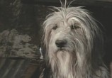 Сцена из фильма Парень и его пёс / A Boy And His Dog (1975) Парень и его пёс сцена 2