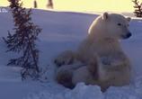 ТВ Королевство белых медведей / Kingdom of the Polar Bears (2021) - cцена 2
