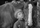 Фильм Мой брат разговаривает с лошадьми / My Brother Talks To Horses (1947) - cцена 7