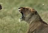 ТВ Львицы: борьба за выживание / Lions: The Hunt For Survival (2021) - cцена 7
