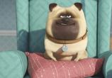 Сцена из фильма Тайная жизнь домашних животных / The Secret Life of Pets (2016)