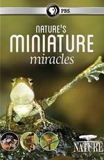 Миниатюрные чудеса