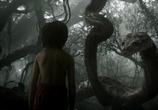 Фильм Книга джунглей / The Jungle Book (2016) - cцена 2