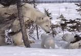 ТВ Королевство белых медведей / Kingdom of the Polar Bears (2021) - cцена 3