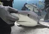 ТВ Discovery: Неделя акул. Самые лакомые кусочки недели акулы / Discovery: Shark Week. Shark bites: Adventures in Shark Week (2010) - cцена 3