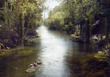 Фильм Книга джунглей / The Jungle Book (2016) - cцена 3