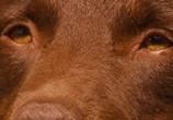 Фильм Рыжий пес / Red Dog (2011) - cцена 2