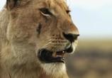 Сцена из фильма Львицы: борьба за выживание / Lions: The Hunt For Survival (2021) Львицы: борьба за выживание сцена 3