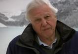 ТВ 90 лет Дэвиду Аттенборо. По ту сторону экрана / Attenborough at 90. Behind the Lens (2016) - cцена 1