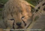 Сцена из фильма Африканские кошки: Королевство смелых / African Cats (2011) Африканские кошки: Королевство смелости сцена 1