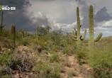 Сцена из фильма Национальные парки Америки. Сагуаро / America's National Parks. Saguaro (2015) Национальные парки Америки. Сагуаро сцена 7