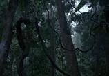 Сцена из фильма Шимпанзе / Chimpanzee (2012) Шимпанзе сцена 1