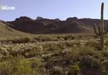 Сцена из фильма Национальные парки Америки. Сагуаро / America's National Parks. Saguaro (2015) Национальные парки Америки. Сагуаро сцена 10