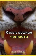 Nat Geo Wild: Самые мощные челюсти