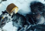 Сцена из фильма Схватка / The Grey (2011) Схватка сцена 12