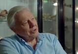 ТВ 90 лет Дэвиду Аттенборо. По ту сторону экрана / Attenborough at 90. Behind the Lens (2016) - cцена 3
