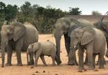 Сцена из фильма Скрытые чудеса Африки / Africa's Hidden Wonders (2020) Скрытые чудеса Африки сцена 13