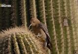 Сцена из фильма Национальные парки Америки. Сагуаро / America's National Parks. Saguaro (2015) Национальные парки Америки. Сагуаро сцена 4