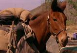 Сцена из фильма Почтальон / The Postman (1997) Почтальон сцена 1