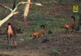 ТВ Viasat Nature: Дикий штат Карнатака, Индия / India's Wild Karnataka (2020) - cцена 6