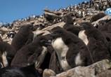 ТВ Альбатрос и хохлатый пингвин / The Albatross and the Rockhopper Penguin (2018) - cцена 4
