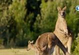 Сцена из фильма Тасмания: удивительная и прекрасная / Tasmania – Weird and Wonderful (2018) Тасмания: удивительная и прекрасная сцена 6