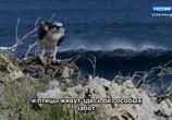 ТВ Королевство кенгуру на острове Роттнест / Rottnest Island Kingdom of the Quokka (2018) - cцена 6