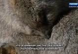 ТВ Королевство кенгуру на острове Роттнест / Rottnest Island Kingdom of the Quokka (2018) - cцена 5