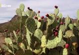 Сцена из фильма Национальные парки Америки. Сагуаро / America's National Parks. Saguaro (2015) Национальные парки Америки. Сагуаро сцена 9