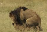 ТВ Львицы: борьба за выживание / Lions: The Hunt For Survival (2021) - cцена 4