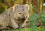 ТВ Тасмания: удивительная и прекрасная / Tasmania – Weird and Wonderful (2018) - cцена 8