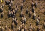 ТВ National Geographic: Великие миграции / National Geographic: Great Migrations (2010) - cцена 2