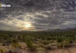 Сцена из фильма Национальные парки Америки. Сагуаро / America's National Parks. Saguaro (2015) Национальные парки Америки. Сагуаро сцена 8