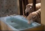Сцена из фильма Бараны / Rams (2020)