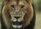 ТВ Львицы: борьба за выживание / Lions: The Hunt For Survival (2021) - cцена 6