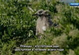 ТВ Королевство кенгуру на острове Роттнест / Rottnest Island Kingdom of the Quokka (2018) - cцена 4