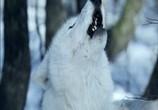 Сцена из фильма Выживая с волками / Survivre avec les loups (2007) Выжить с волками сцена 1