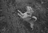 Фильм О чём молчала тайга (1966) - cцена 2