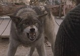 Сцена из фильма Белый клык / White Fang (1991) Белый клык сцена 3