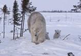 ТВ Королевство белых медведей / Kingdom of the Polar Bears (2021) - cцена 5