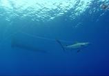 ТВ Неделя акул / Shark Week (2015) - cцена 1
